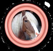 President Sahra het paard.png