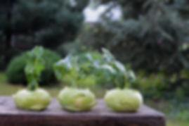 chinese-cabbage-kohlrabi-1573404_1920.jp