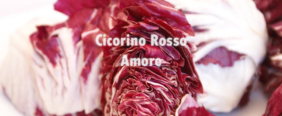 Cicorino Rosso.jpg