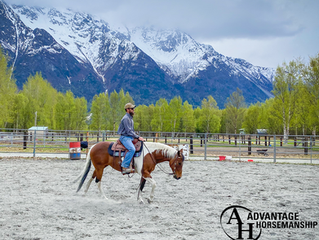 How Often Should you Work your Horse?