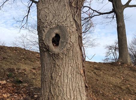 The Imaginary Hole
