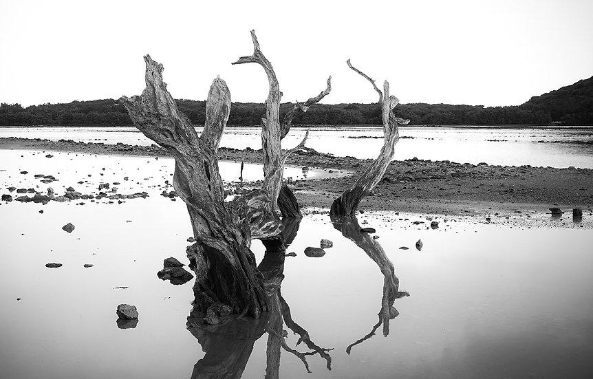 Nature morte 1