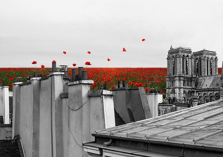 Sur les toits fleuris