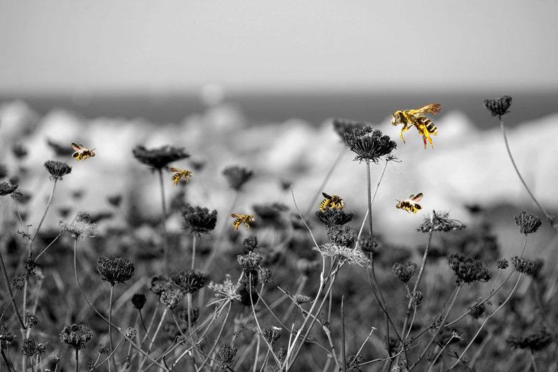 Balade entre abeilles