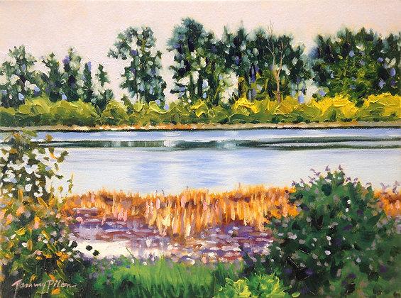 Pitt River with Grass Shoreline