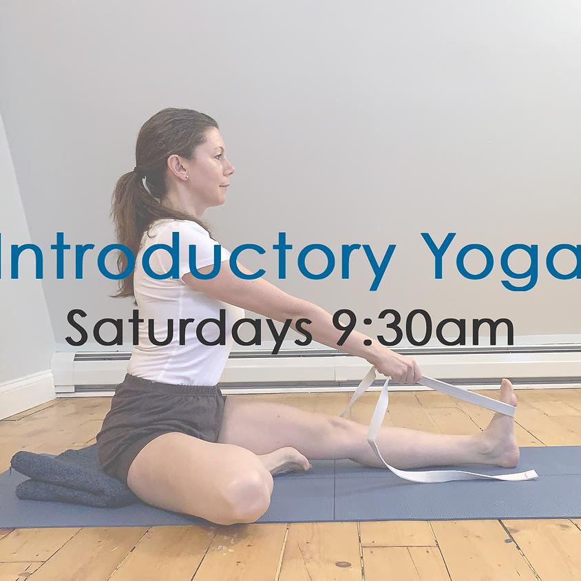 Virtual Introductory Yoga