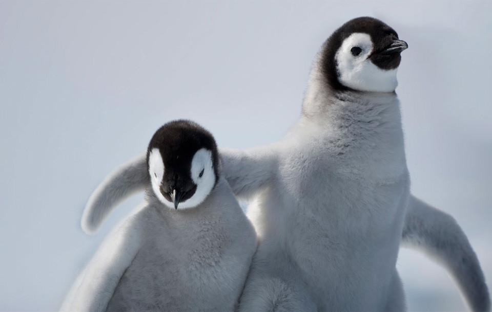 emperor-penguin-youth-hugging.jpg