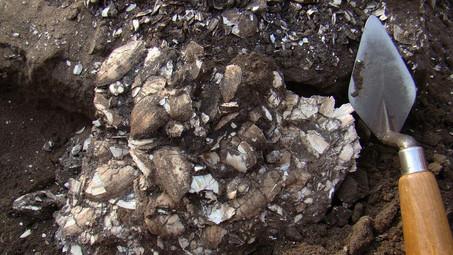 Археологическая разведка по бассейнам рек Черная Калитва и Богучарка