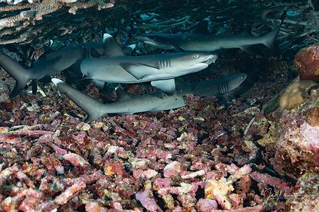 Mele Reef Sharks 6.4.19-1.jpg