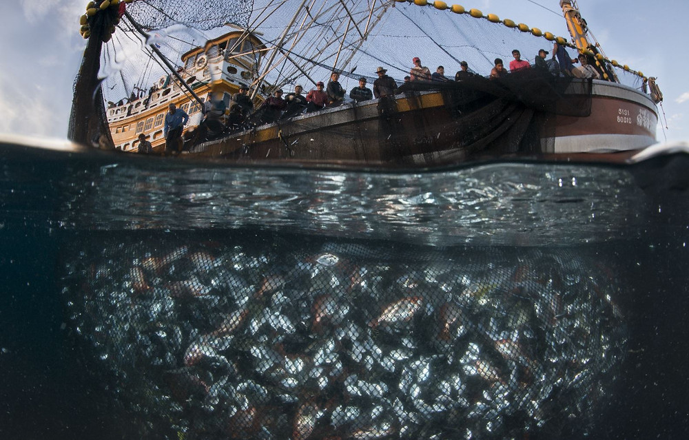 Thai Fishing vessel and catch