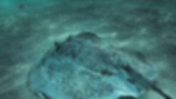 Porcupine Ray4_sm.jpg