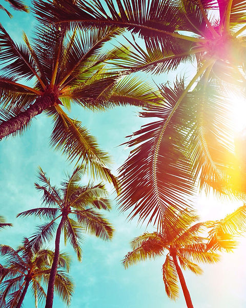 Canva - Sunlight between palm trees.jpg