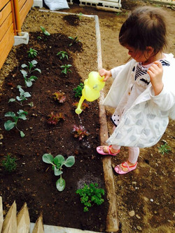 Our Little Oz garden