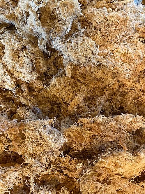 Bulk Wildcrafted Sea Moss (10lbs)