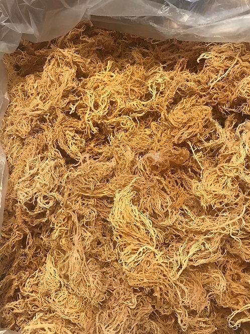 Bulk Wildcrafted Sea Moss (5lbs)