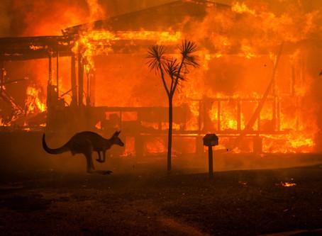 Οι πυρκαγιές στην Αυστραλία έχουν κάψει δασικές εκτάσεις όσο το 1/3 της Ελλάδας κι έχουν αφανιστεί π