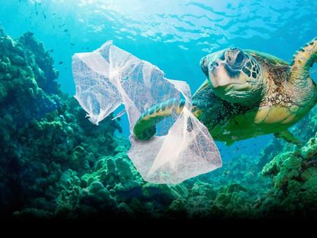 Πάνω από τις μισές θαλάσσιες χελώνες παγκοσμίως έχουν φάει πλαστικό