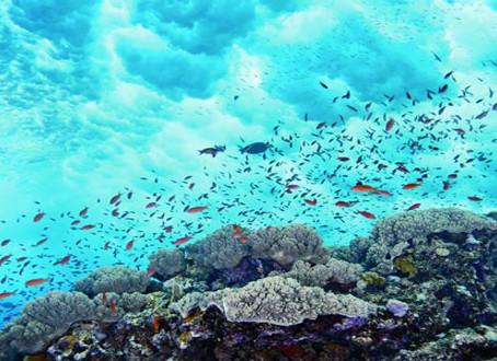 Στα σκαριά νέο σύστημα Περιβαλλοντικής Παρακολούθησης των Ελληνικών Θαλασσών