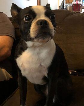 Rosie pooch.JPG