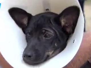 Prefeitura começa agendamento de castração de animais em São Cristóvão