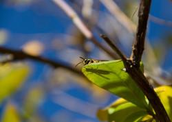 wasp shadow