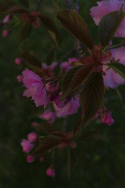 Spring Hunt_4