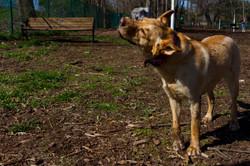 Dres and Nia at dog park_171