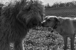 Dres and Nia at dog park_173