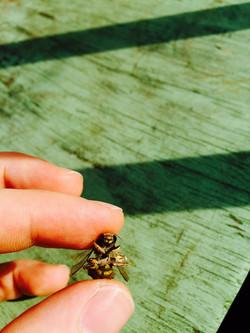 Held Bee