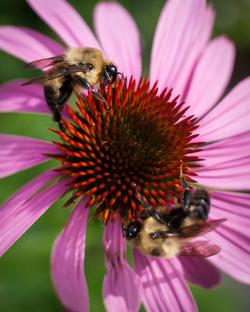 Rebel t1i bees and bridge_07_2