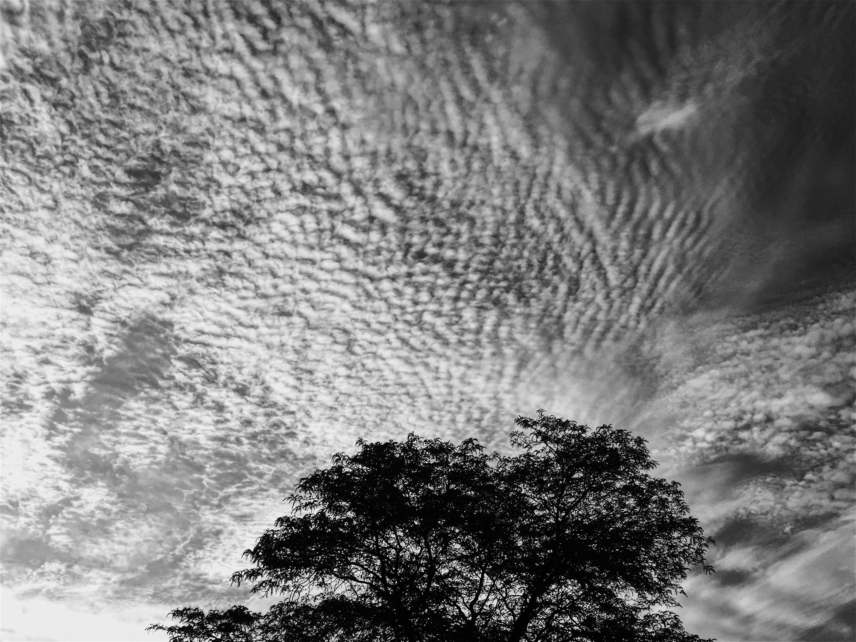 Tree Cloud