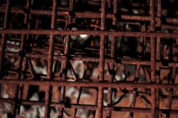 Logan Steel Rust 2