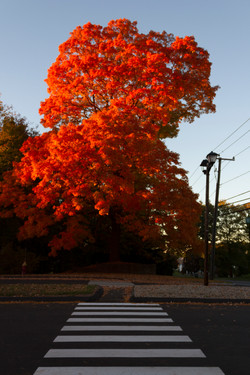 Autumn on the Quinnipiac River_139