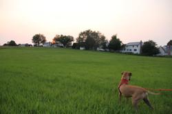 Sophie in Willow Field