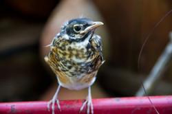 Zendo Young Bird_09