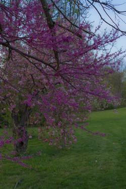 Spring Hunt_1