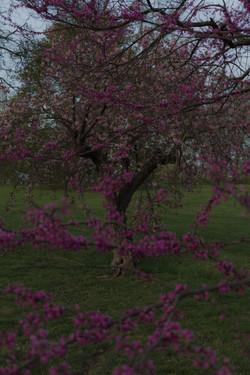 Spring Hunt_3
