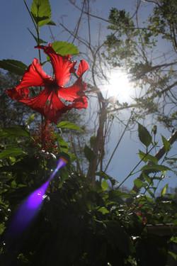 Costa Rica_11