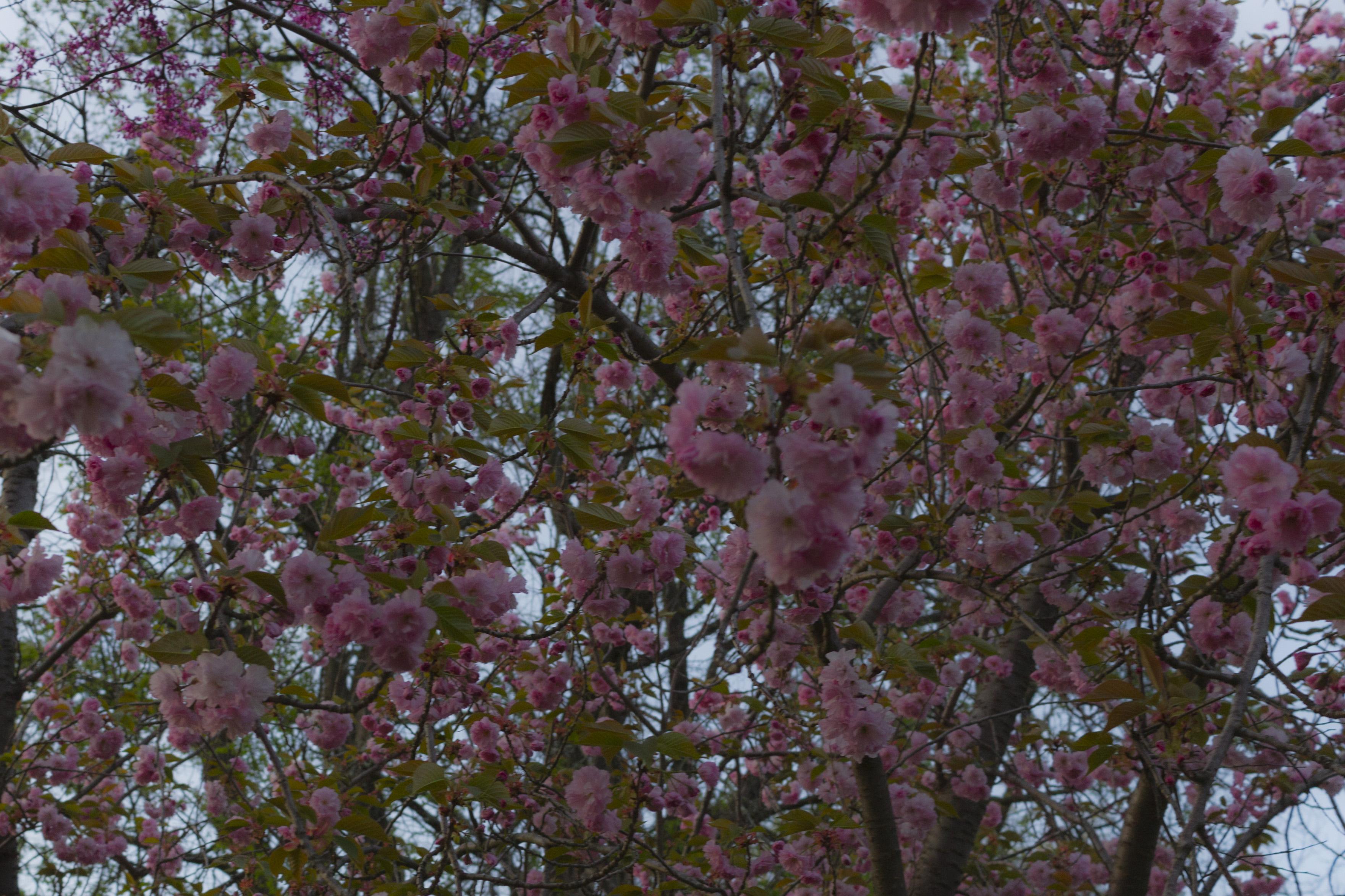 Spring Hunt_2