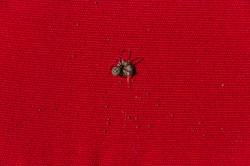 Cushion Spider_31