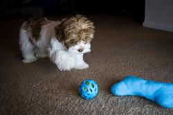 Eli Bryants Dog_006