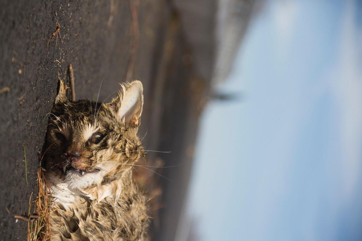 craw edit - Cat Gross Negligence_05_edited.jpg