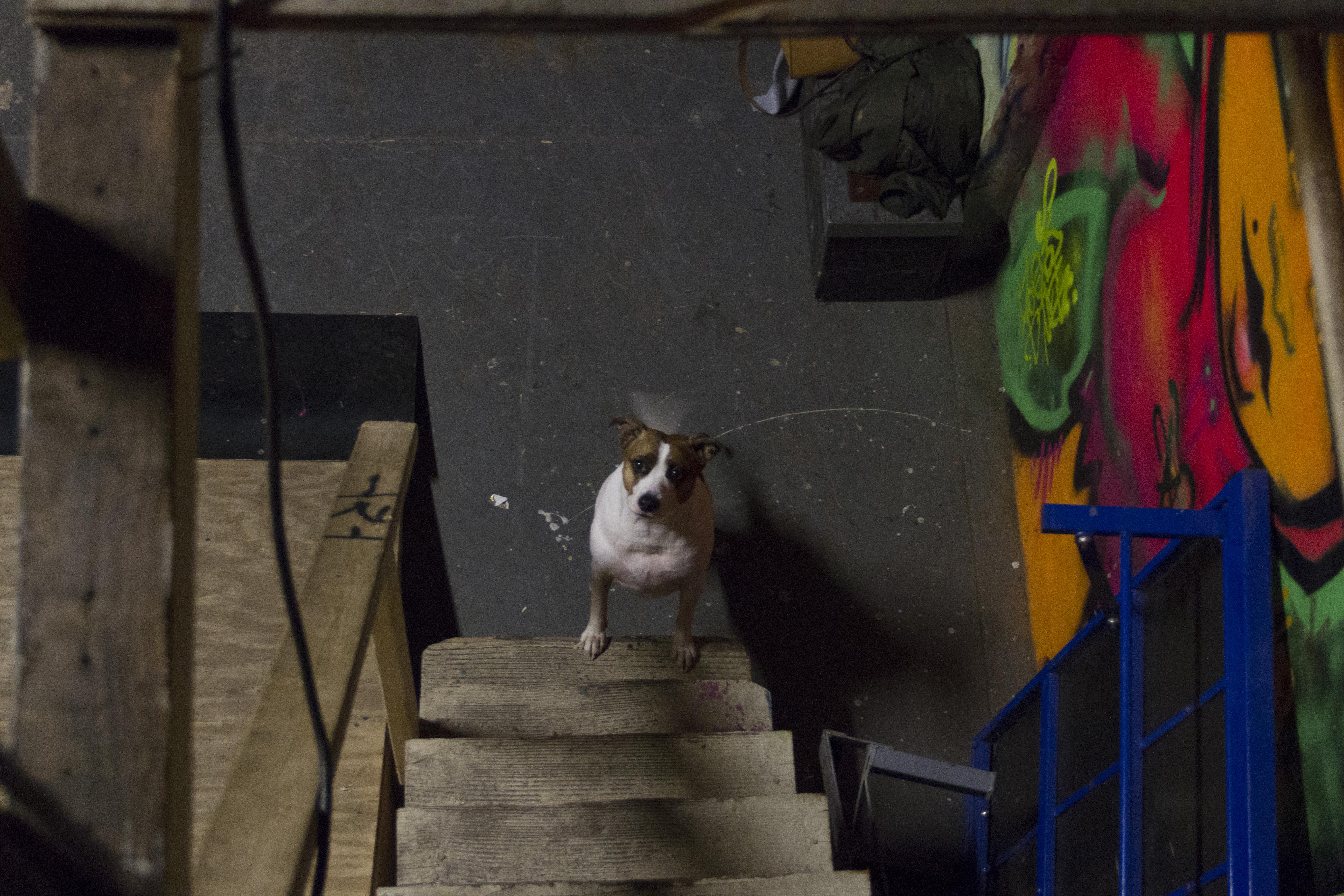 dog at stairs