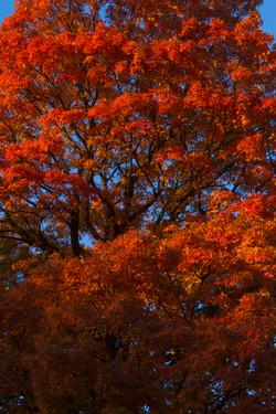 Autumn on the Quinnipiac River_166
