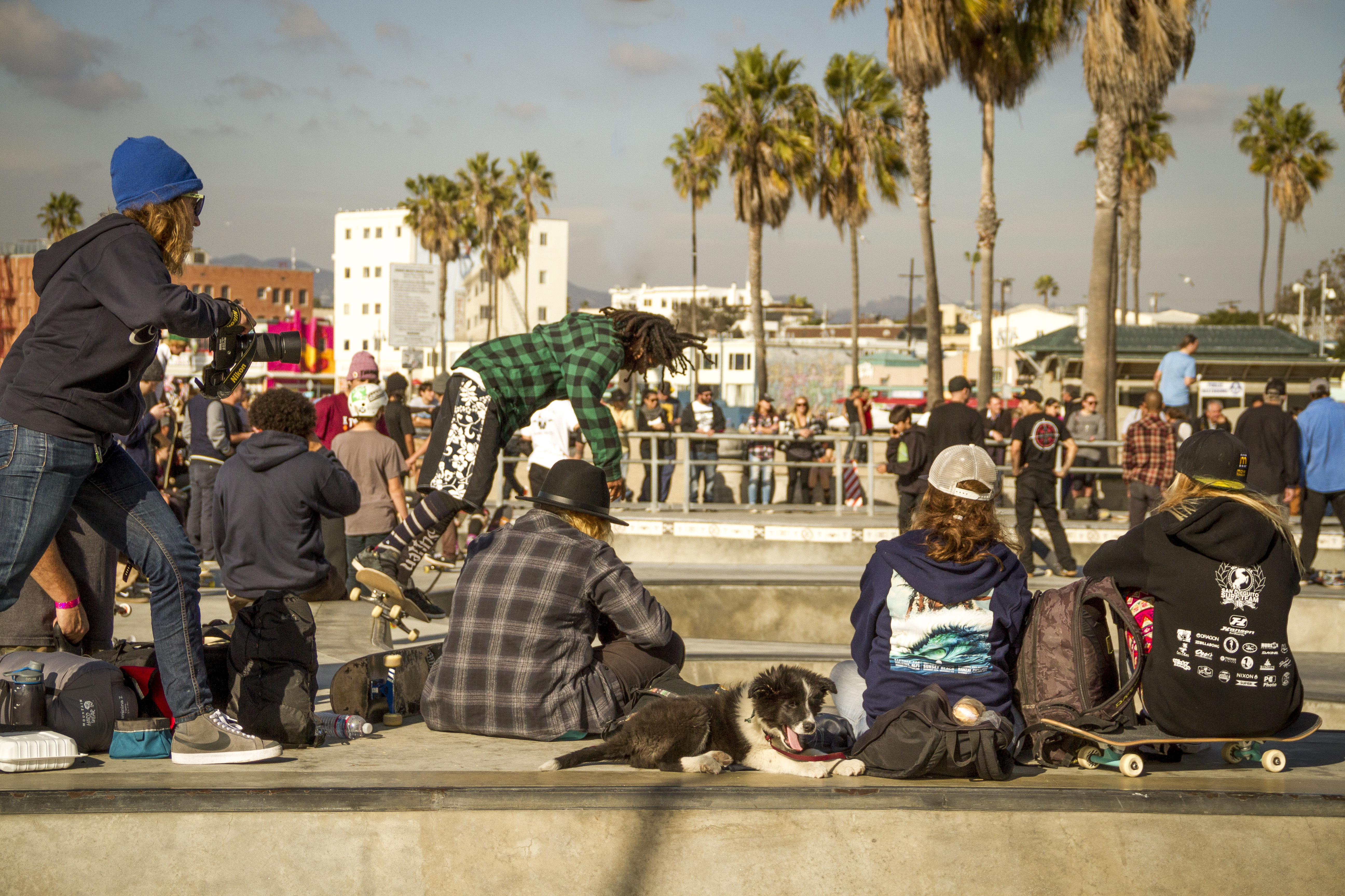 craw edit - venice drop in pup