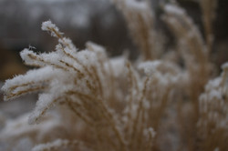 Snowy Elizabeth Park_077