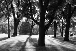 b&w trees