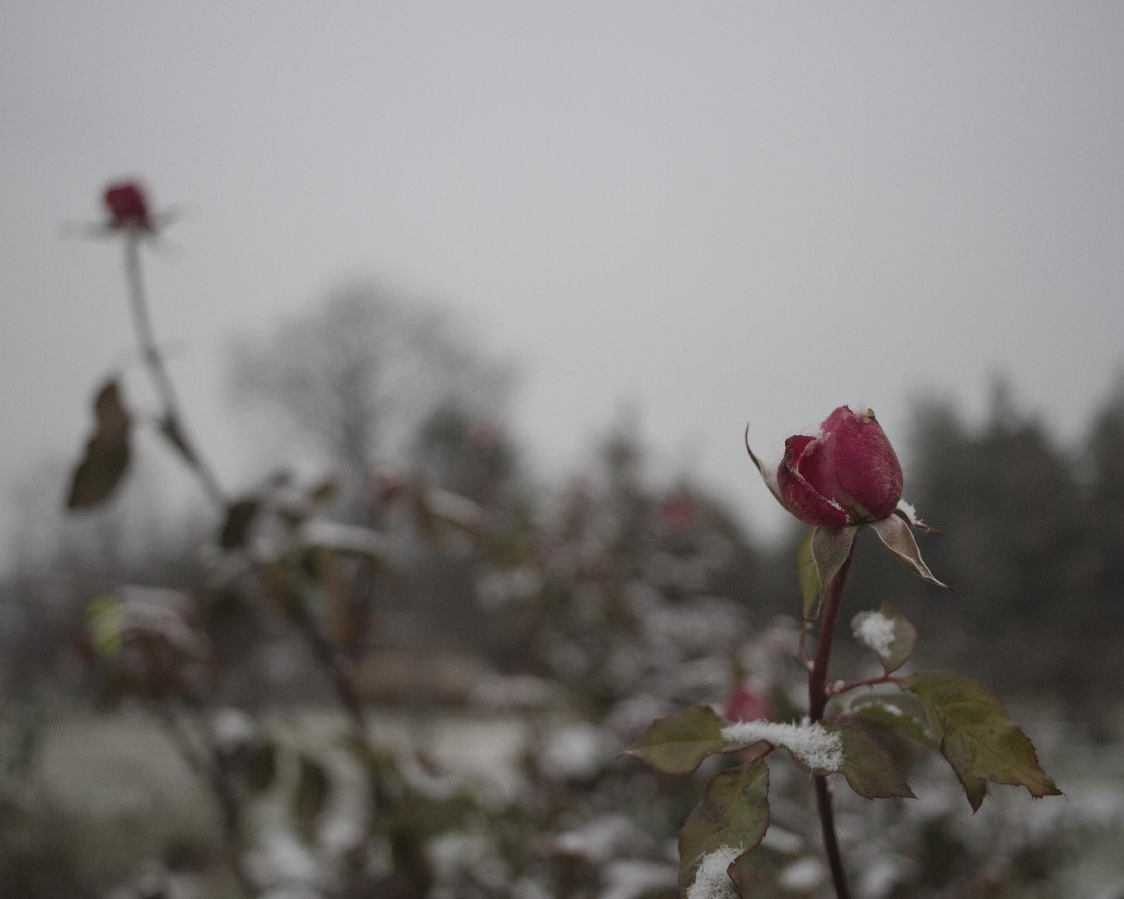 Snowy Elizabeth Park_039