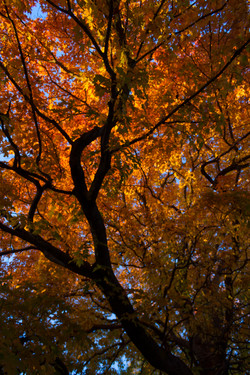 Autumn on the Quinnipiac River_149