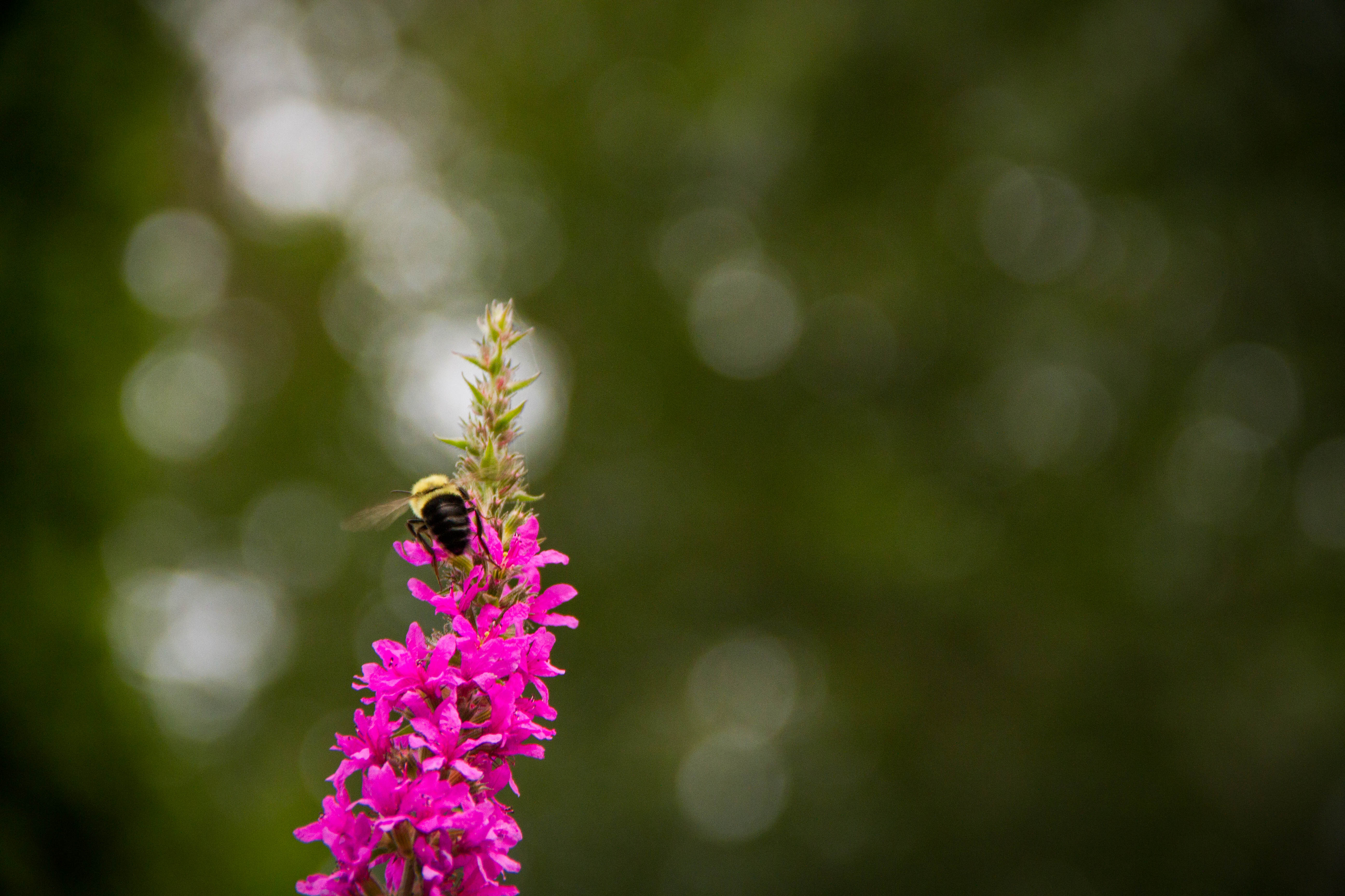 Lynda HW plus BeeHunt_028